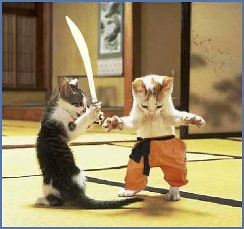 gatos_samurai[1].jpg